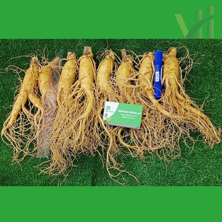 Hình ảnh sâm tươi Hàn Quốc 8 củ/kg loại 1