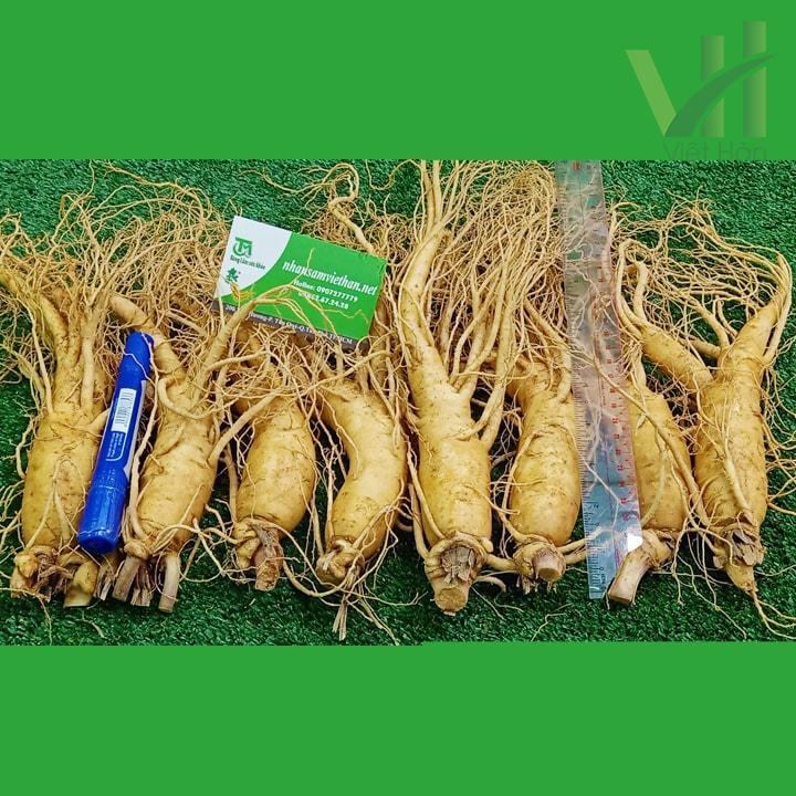 Hình ảnh sâm tươi Hàn Quốc 8 củ/kg đều đẹp