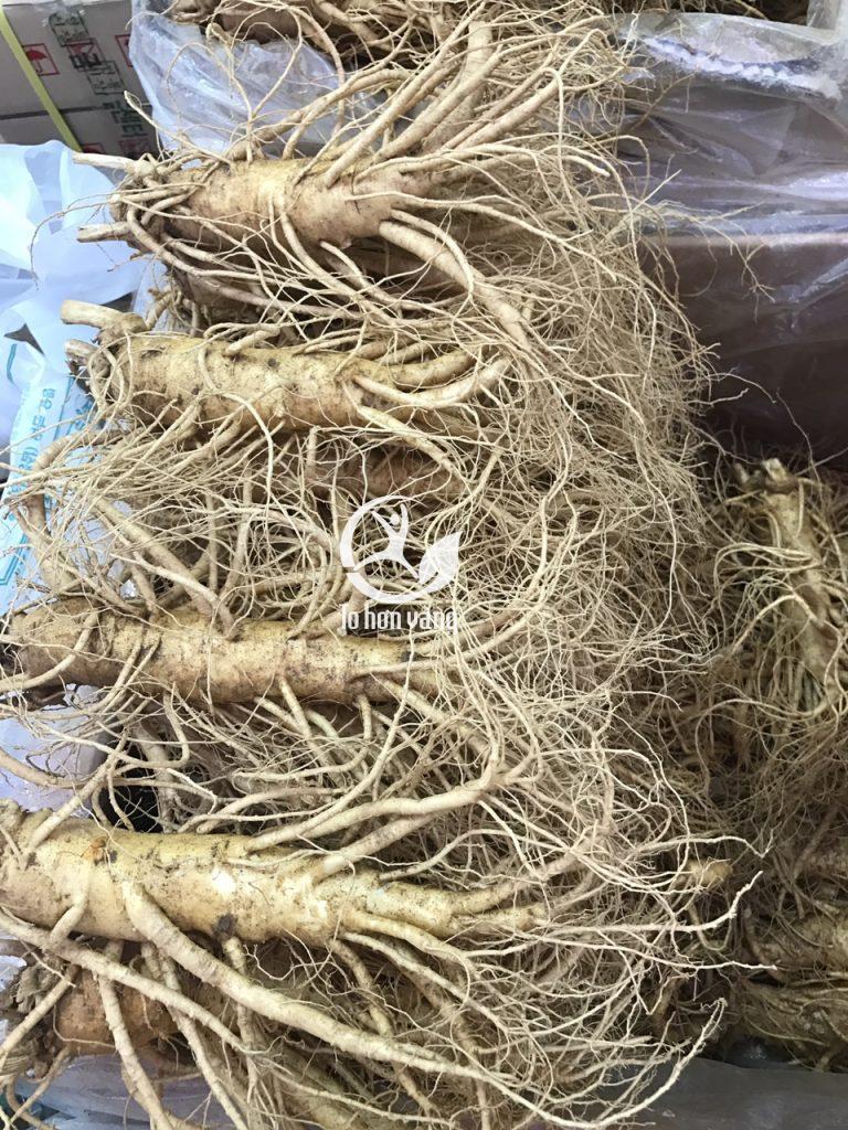 Nhân sâm tươi có trọng lượng 4 củ 1 kg với kích thước đồng đều, rễ dài và nhiều, hình dáng đẹp