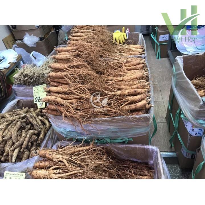 Sâm tươi 14 củ 700 gram dùng chế biến các món ăn giúp bồi bổ sức khỏe hiệu quả