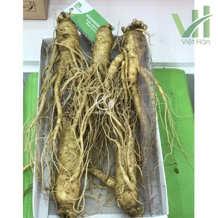 Sâm tươi Hàn Quốc 5 củ 700 gram luôn có sẵn tại cửa hàng