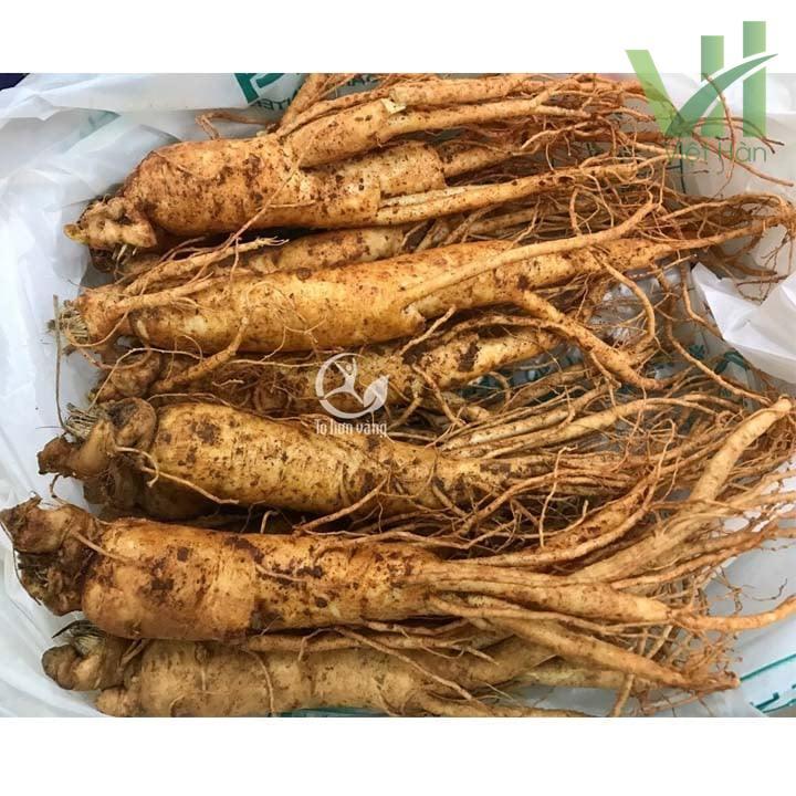 Hình ảnh sản phẩm sâm tươi Hàn Quốc 7 củ 700 gram - Sâm loại 1