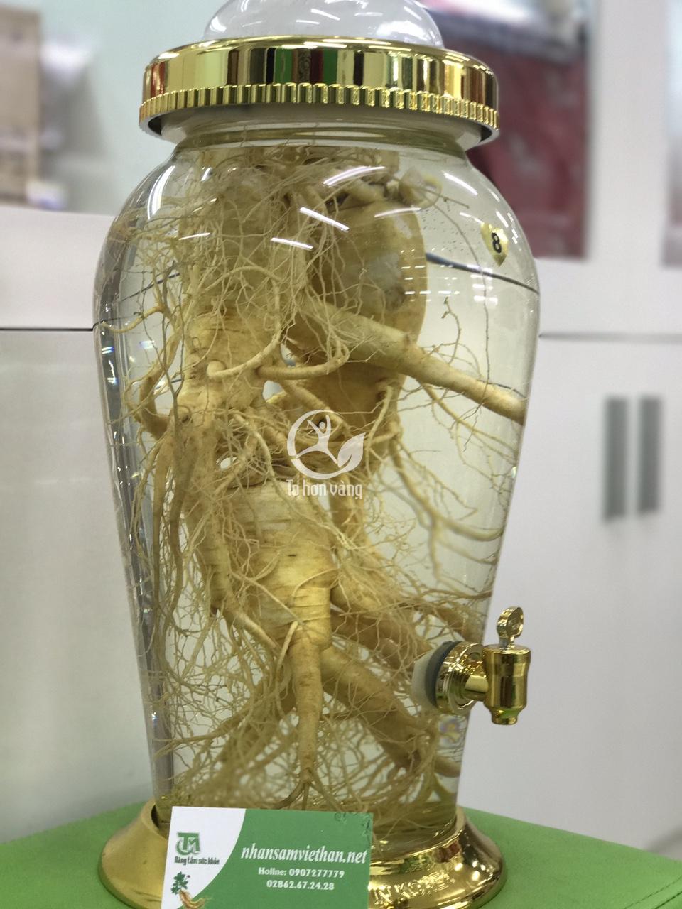Đây là mẫu bình ngâm sâm thủy tinh có kiểu dáng rất sang trọng và được nhiều người lựa chọn