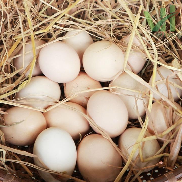 Hình ảnh trứng gà ta rất tốt cho sức khỏe